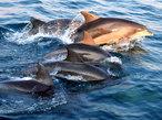 ロマンチック&エキゾチック イルカの島「天草」のあふれる魅力