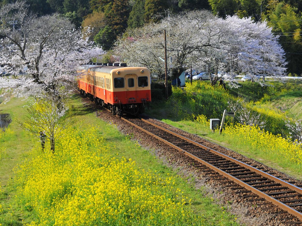 """いつか行きたい! 日本の絶景 """"電車×花畑""""のレトロな風景5選"""