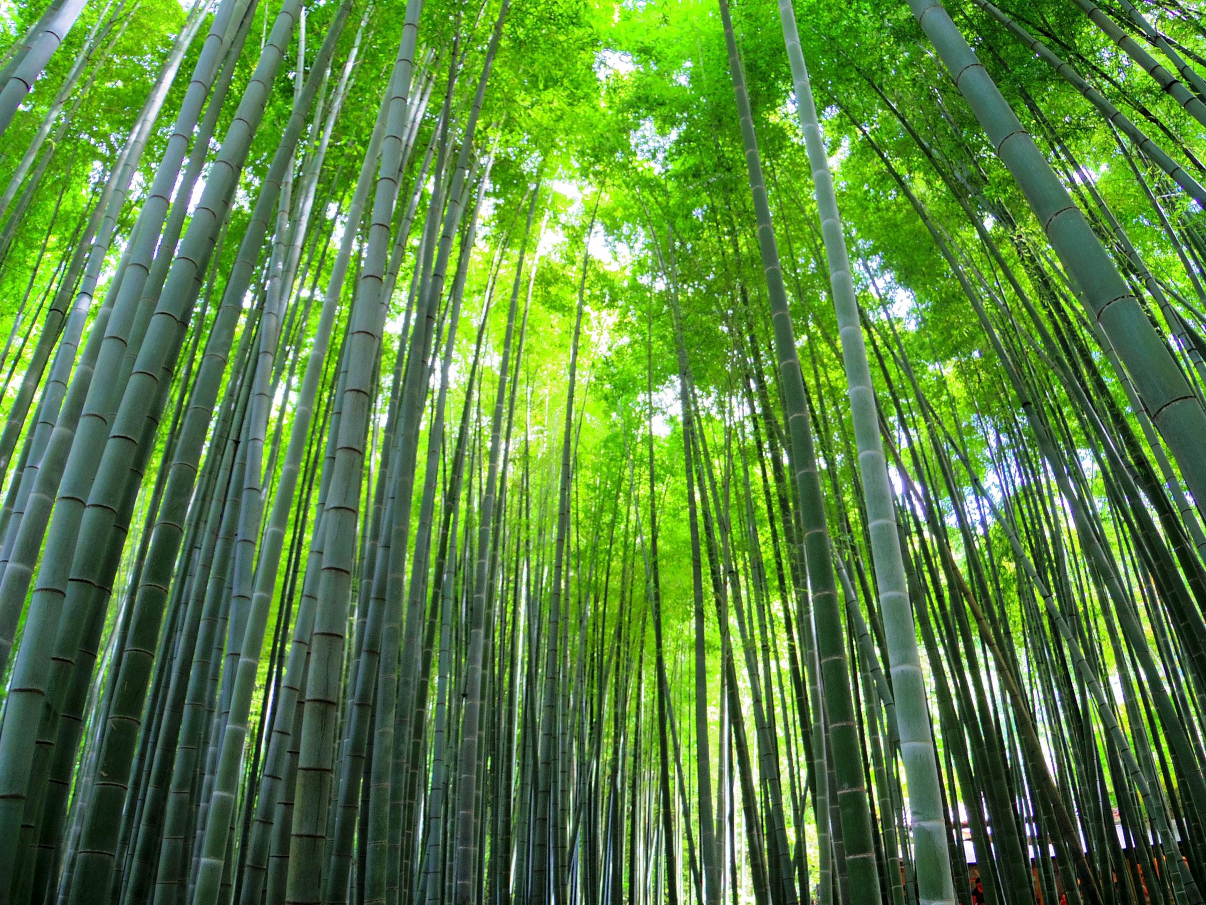 【神奈川県】夏の絶景・風物詩5選 神秘的な光景が広がる寺院の竹の庭