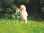 人気ナンバーワンのアイドル犬! 俊介くんの魅力大解剖