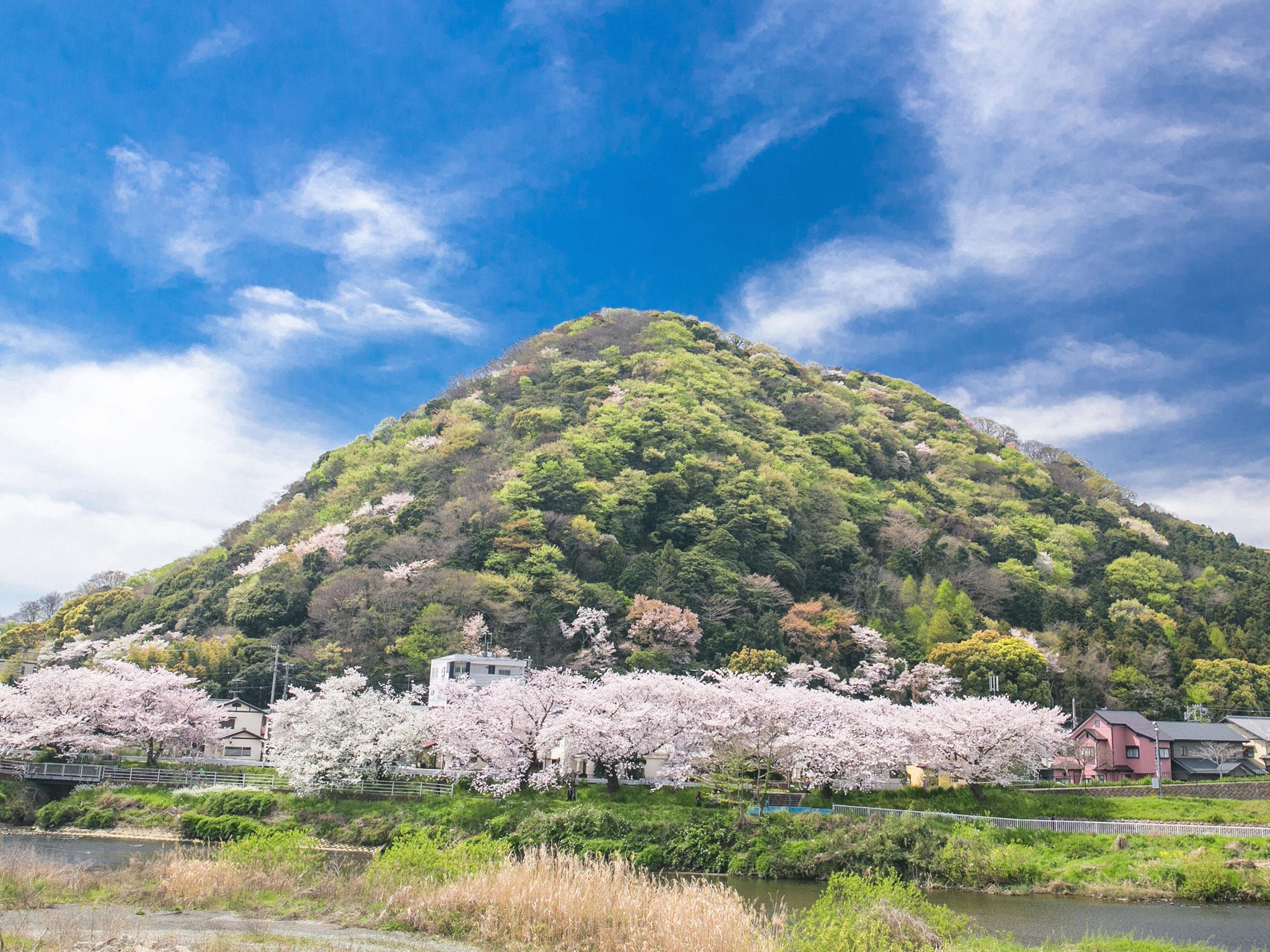 【神奈川県】春の絶景・風物詩4選 桜と美しい山が織りなす日本の原風景