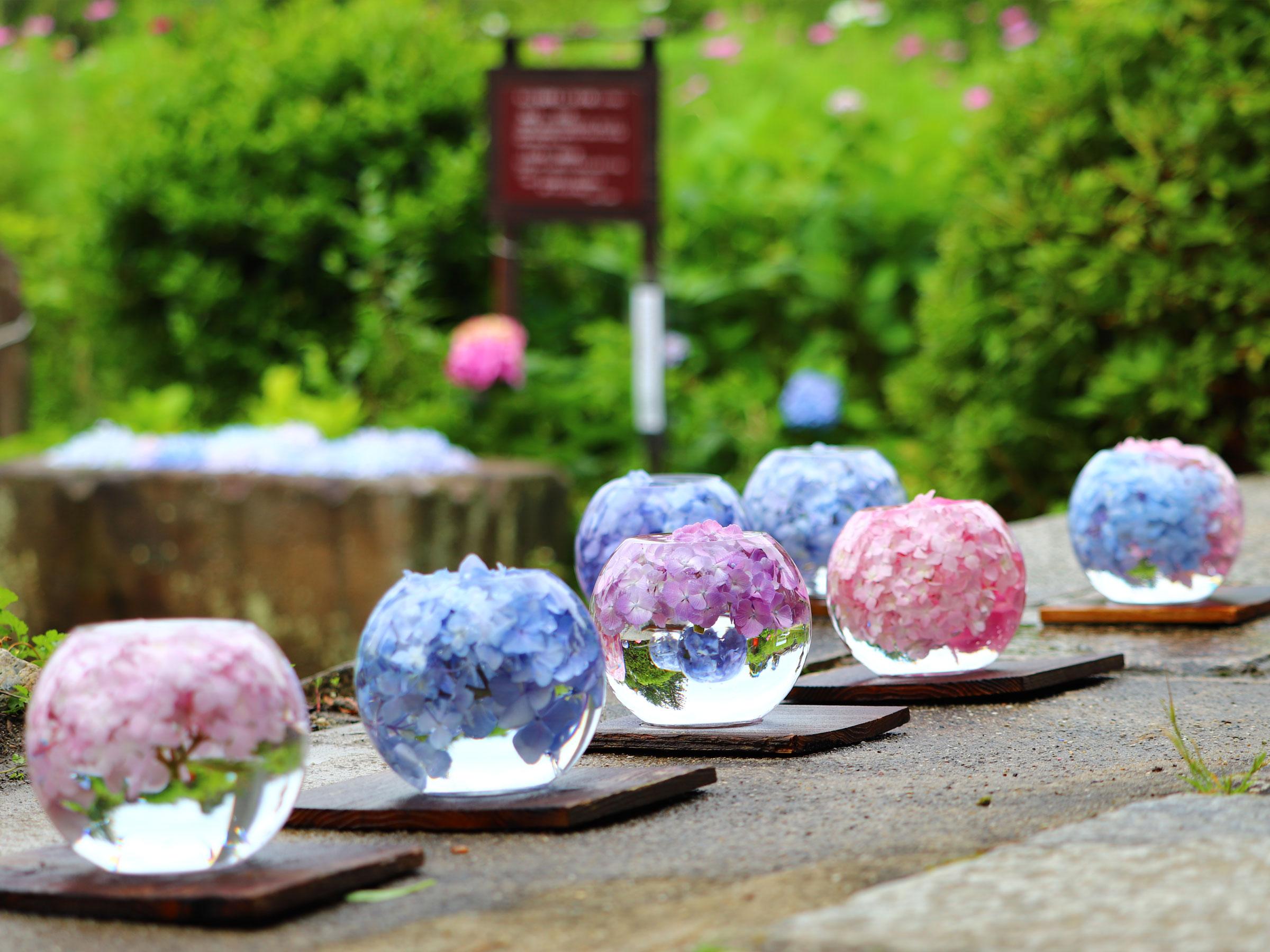 【奈良県】夏の絶景・風物詩4選 古刹を彩る鮮やかなアジサイの花手水