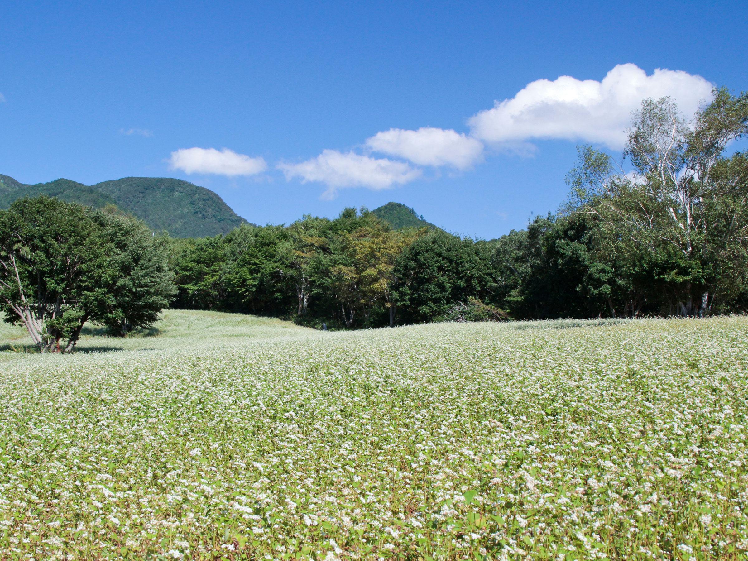 【福島県】夏の絶景・風物詩5選 白い花の絨毯が広がる天空のそば畑