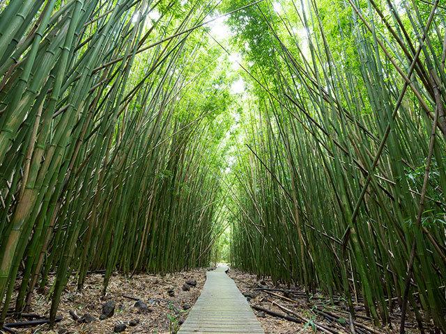 竹林ハイキングにハワイ産ワイン? <br />従来のイメージを覆すマウイ島の旅へ