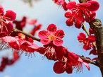 伊豆花遍路で春を満喫!