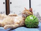 武井壮おすすめ! 癒され猫動画5選