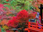 尼さん日本画家 中田文花と遊ぶ古都風物詩