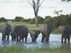 ボツワナ、動物たちの聖域