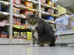 梅津有希子の商店街ネコ探訪
