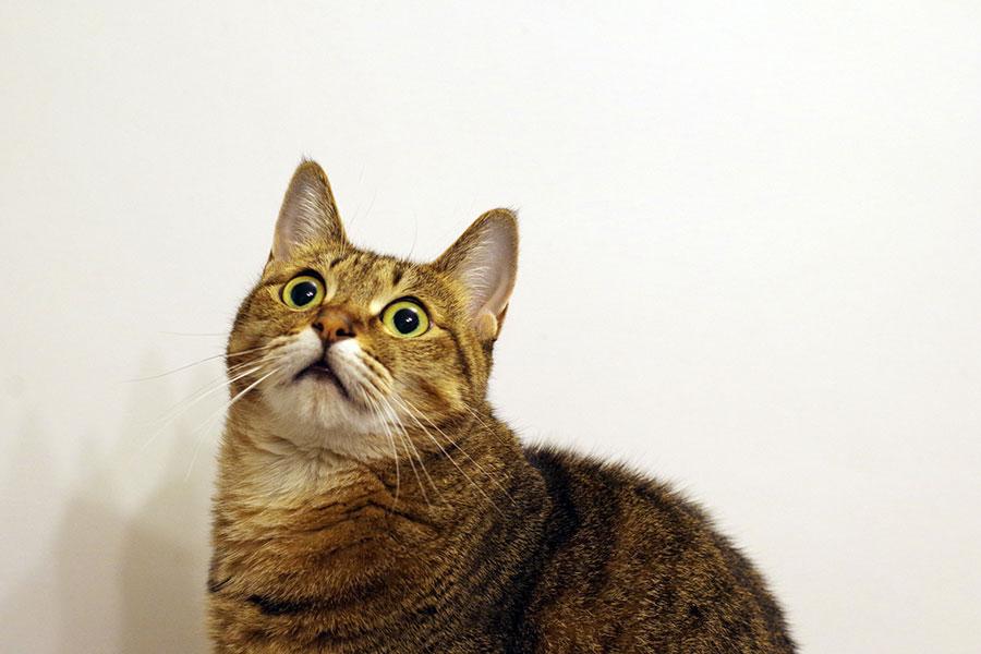 なぜ猫はパニックになりやすいの? 猫脳のしくみを解き明かします ...