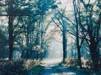 週末は緑の中でデトックス 準備いらずの森散歩